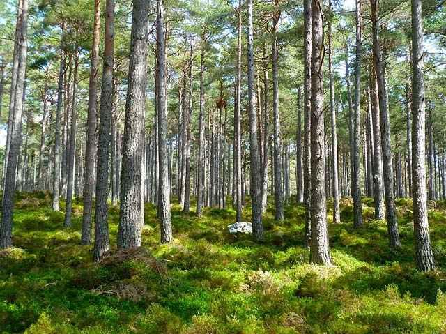 La tala de bosques es uno de los mayores problemas que enfrenta el planeta.