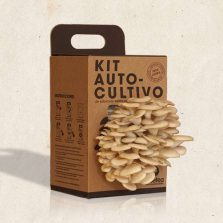 Pack kit de autocultivo de Setas, Regalos originales gourmet Gastroidea.com
