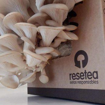 Pack kit de autocultivo de Setas de Resetea - Regalos originales gourmet Gastroidea.com